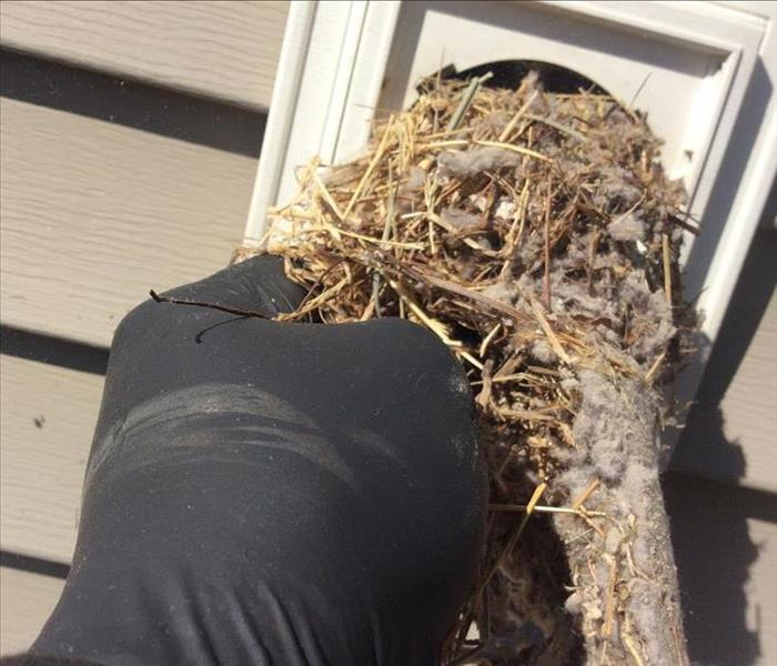 Bird Nest Blocking Dryer Vent on Exterior of a House, hand removing it